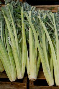 ΑΓΚΙΝΑΡΑ (Cynara cardunculus L.)
