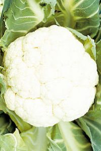 ΚΟΥΝΟΥΠΙΔΙ (Brassica oleracea botrytis)
