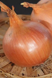 ΚΡΕΜΜΥΔΙ (Allium cepa) ΜΕΓΑΛΗΣ ΗΜΕΡΑΣ