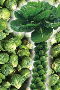 ΛΑΧ. ΒΡΥΞΕΛΛΩΝ (Brassica oleracea G.)