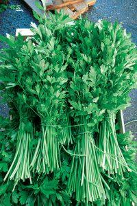 ΜΑΙΝΤΑΝΟΣ (Petroselinum crispum)