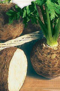 ΣΕΛΙΝΟ ΡΙΖΑ (Apium graveolens)