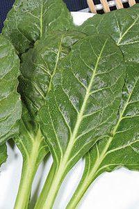ΣΕΣΚΟΥΛΟ (Beta vulgaris)