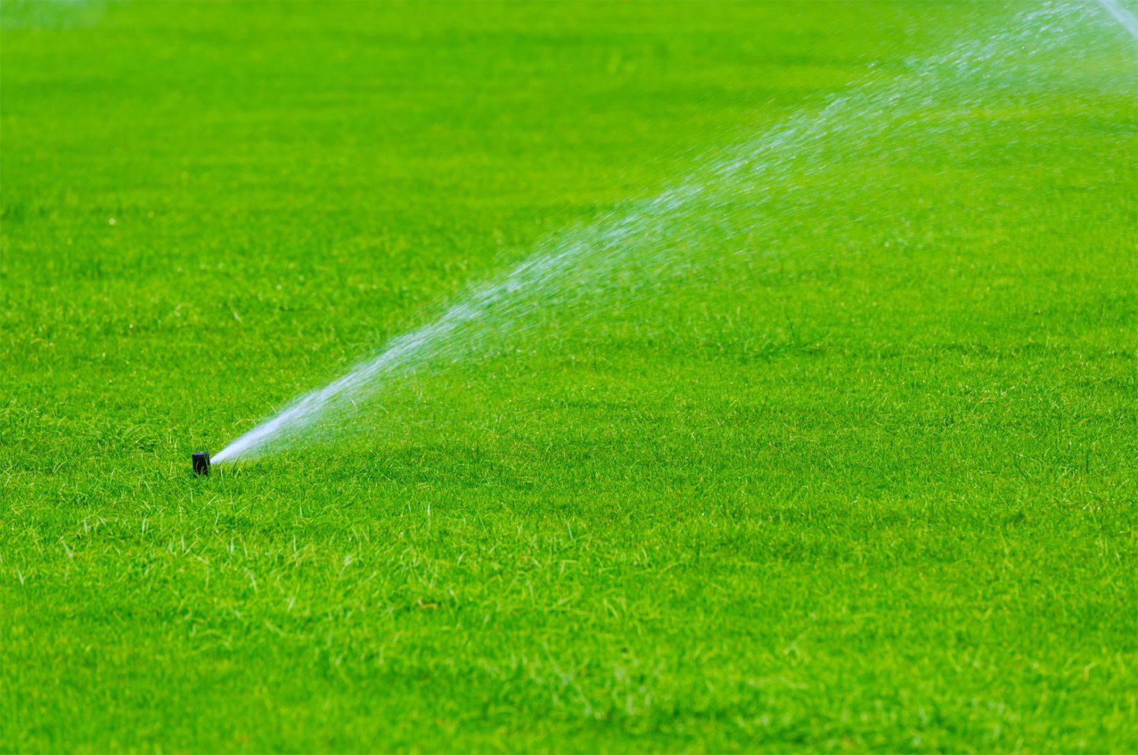 dianthos irrigation system
