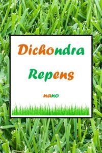gazon dichondra repens nano